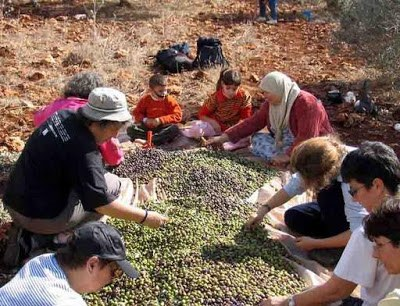 Group of people sorting olives